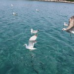 Isole della Croazia, Lussino & Co