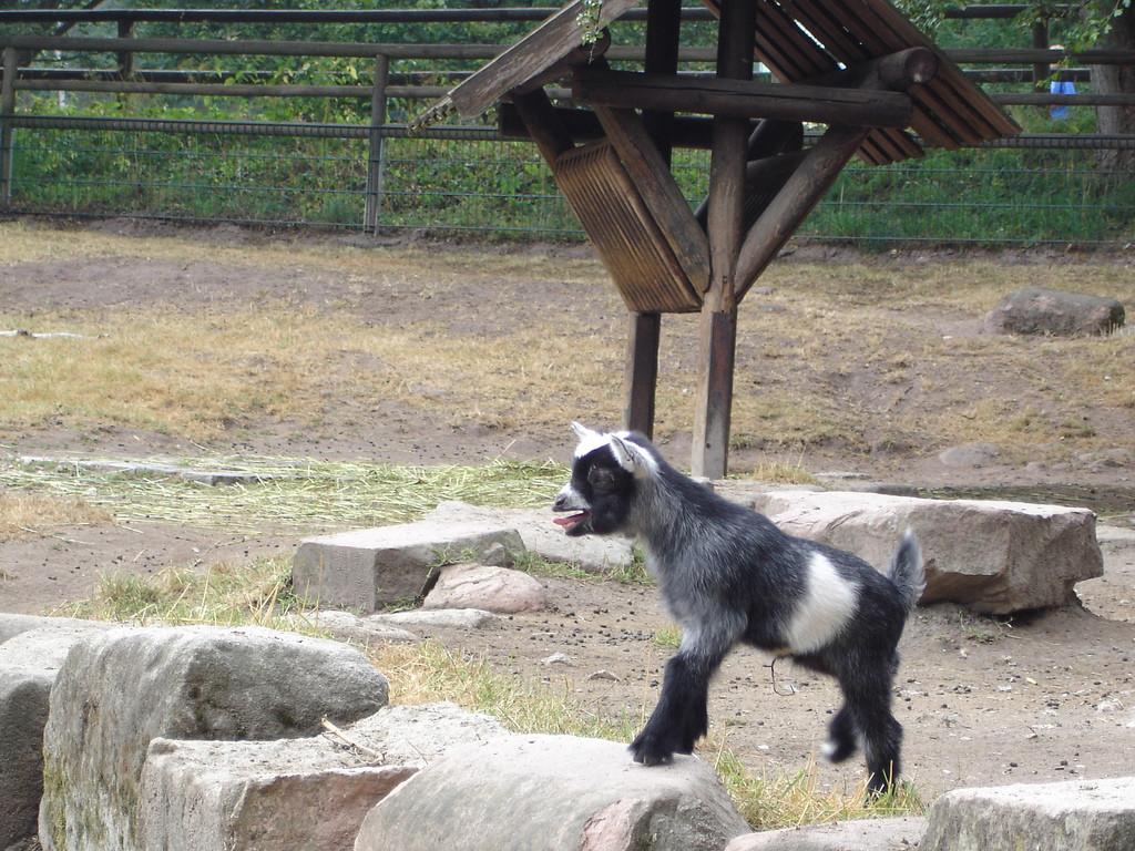 Visita al Tiergarten di Schoebrunn