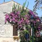 Rovinj una vera chicca in Istria
