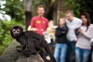 scimmia a randers