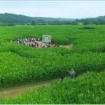 Il labirinto di granoturco in Belgio