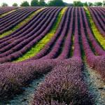 campi in provenza