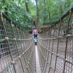 BeWILDerwood, il parco nel bosco