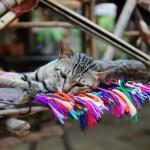 Vietnam – Sapa e Cat Cat