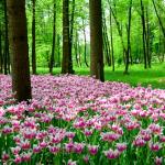Arboretum Lubiana Slovenia