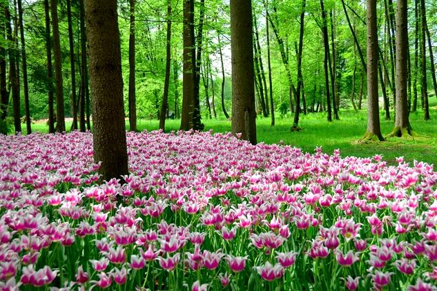 arboretum lubiana
