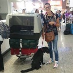 Aereo con cane, consigli di viaggio
