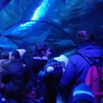 Sea Life Aquarium a Gardaland