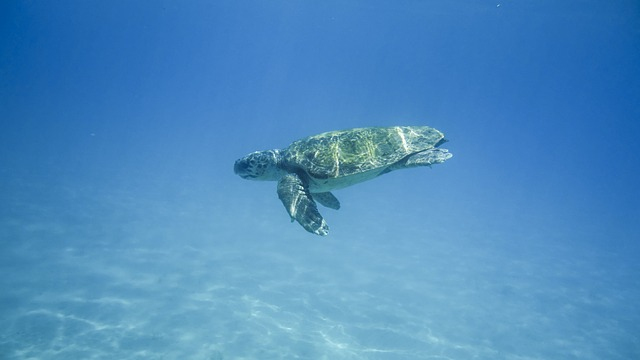 tartarughe zante