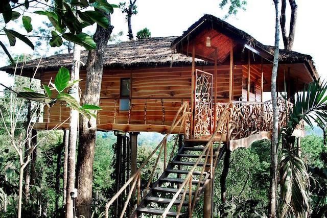 casa albero india