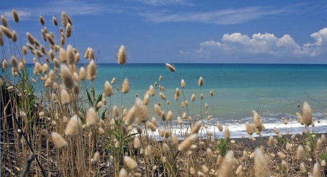 spiagge vicino livorno