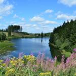 Harz il Parco Nazionale in Germania