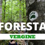 Foresta Vergine in Slovenia