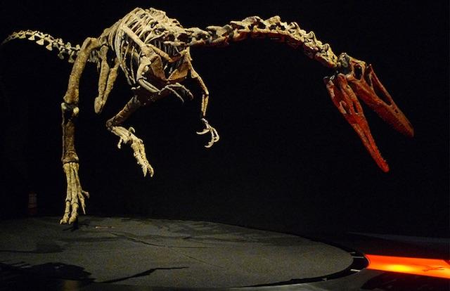 dinosauri a padova