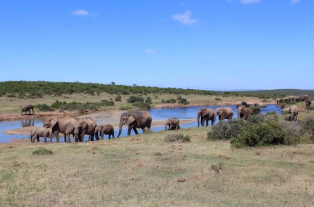 parco-elefanti-sud-africa