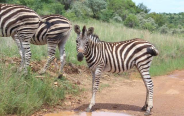 parchi sudafrica