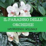 Il Paradiso delle Orchidee