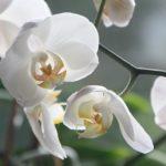 parco delle orchidee