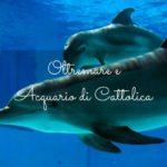 Acquario di Cattolica e Oltremare: i parchi regno dei più piccoli