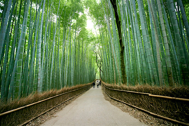 parco arashiyama