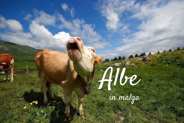 albe in malga