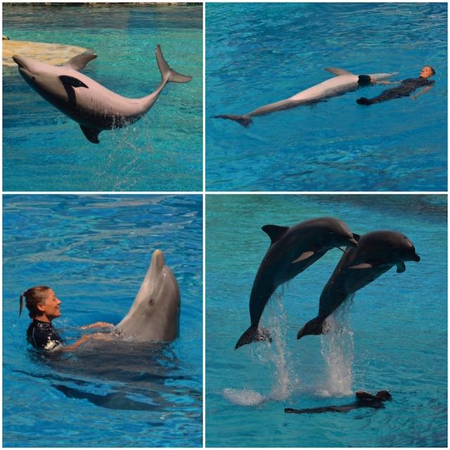 delfini Oltremare