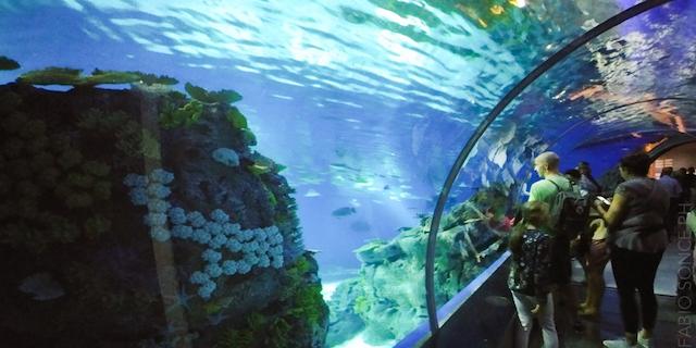 Pianeta blu l 39 acquario di copenhagen for Blu di metilene acquario