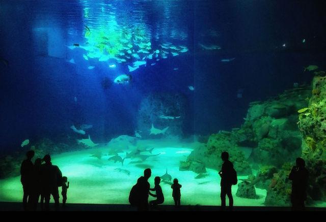 pianeta blu l 39 acquario di copenhagen