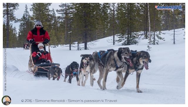 slitta cani avventura