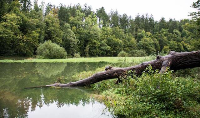 carso verde laghi