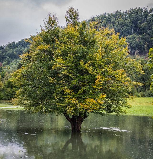 carso verde albero