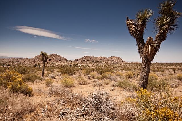 deserto california con i bambini