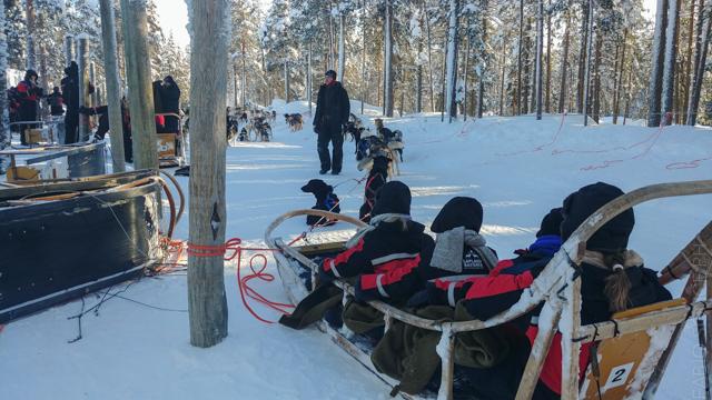 escursione cani slitta