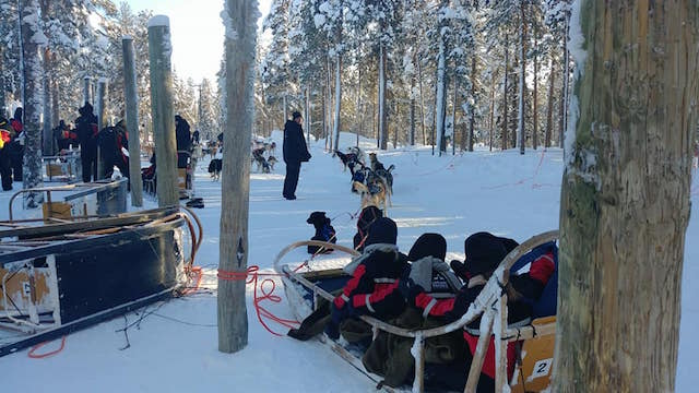 Rovaniemi cani slitta