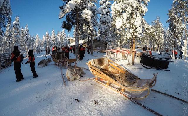 Rovaniemi fattoria renne