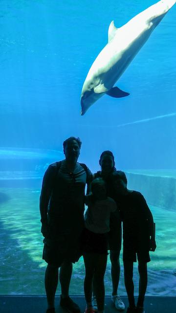 delfini acquario