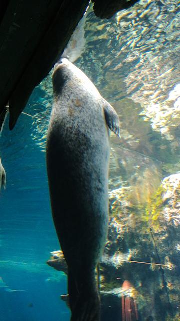 acquario lamantino