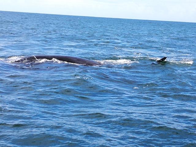 sudafrica balene