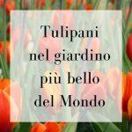 Tulipani nel giardino più bello del mondo