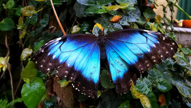 farfalle a Montegrotto