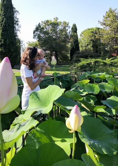 fior di loto e neonato