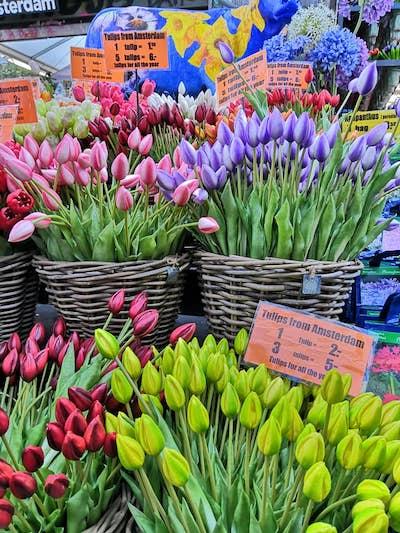 tulipani Amsterdam