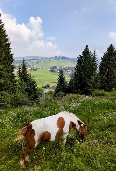 ponies ad Asiago
