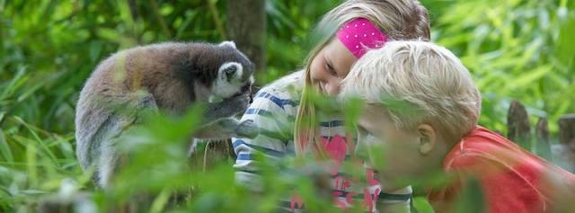 scimmie e bambini