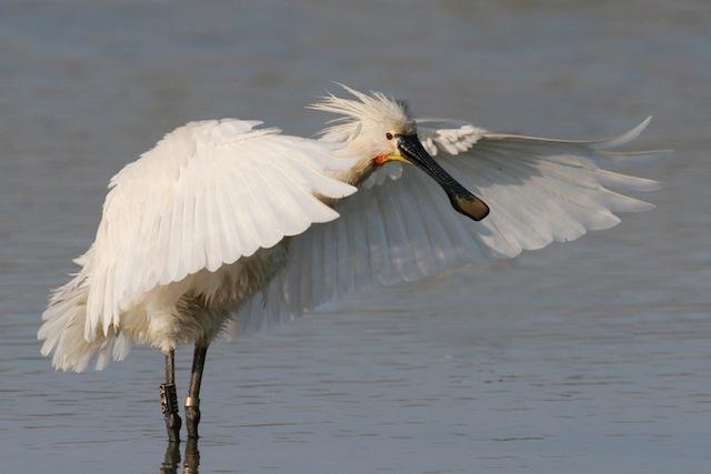 uccello parco Delta del Po