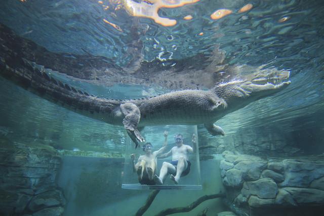 Crocosaurus Cove Australia in famiglia