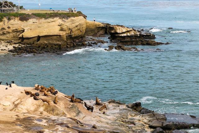 foche california tour