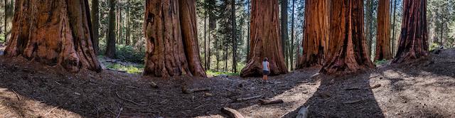 Giant Forest California con bambini