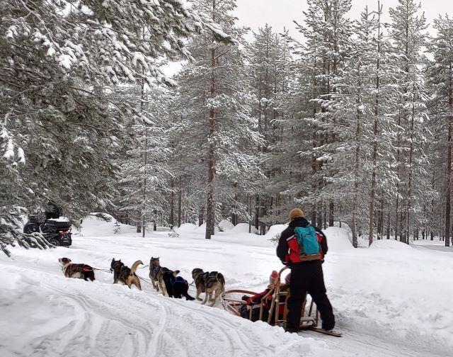 safari con cani da slitta