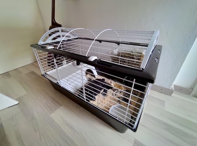 gabbia coniglio nano